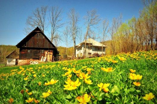 Pensiunea Țarina - Roșia Montană